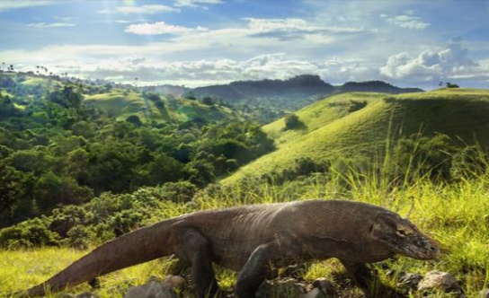 Inside Indonesia's new tourist attraction inspired by ...
